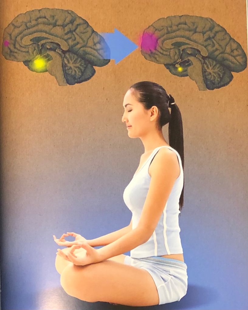 """The Meditative Brain - picture from the book """"30-Second Brain"""""""